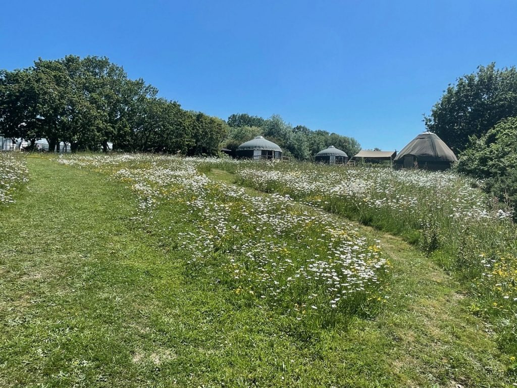 The Meadow & Yurts